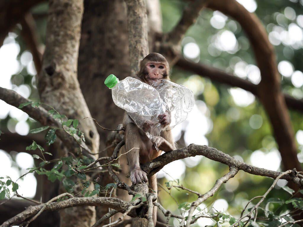 Monkey plastic bottles
