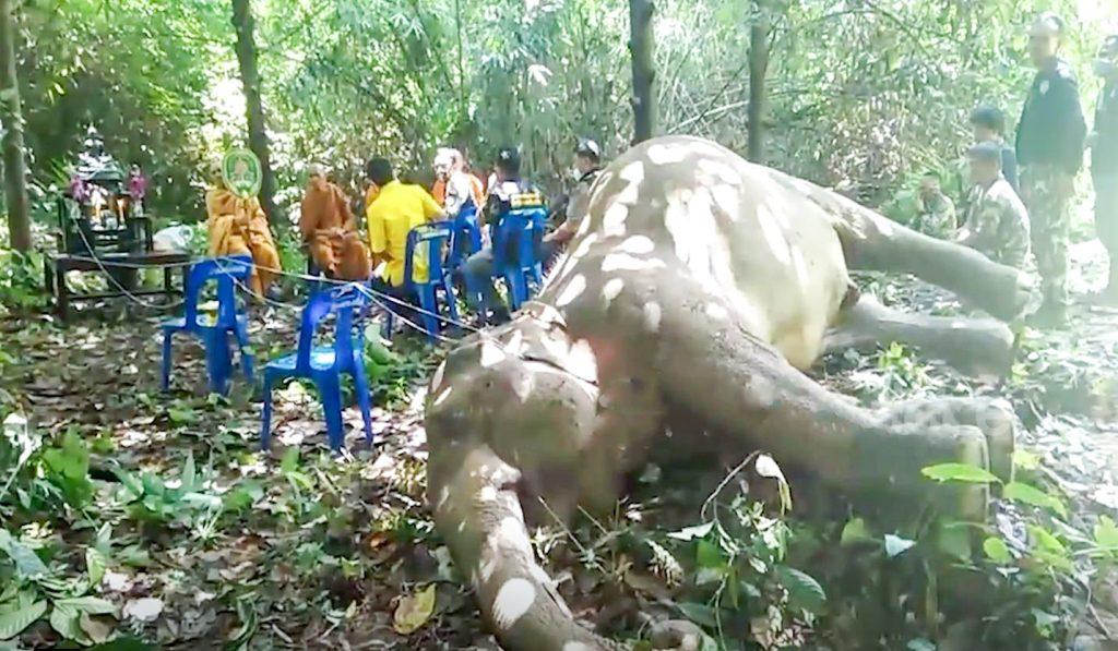 Thai elephant dies plastic waste