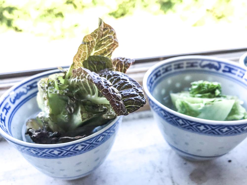 regrow a food scrap of lettuce vegetable