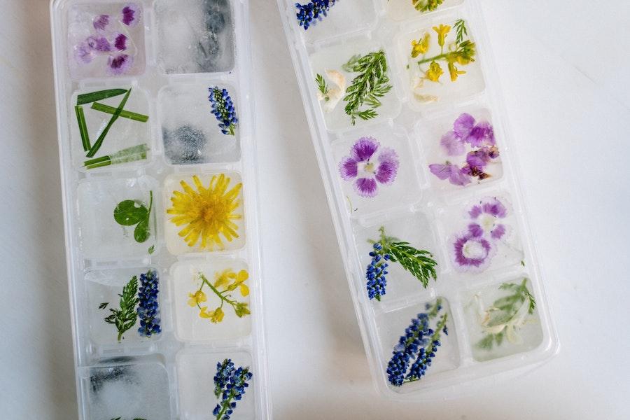 how to freeze herbs3.jpg how to freeze herbs2.jpg how to freeze herbs in ice cube trays